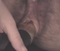Pornoanimal Animal Porn