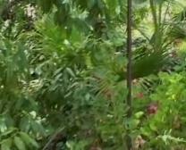 Japonesa Cojiendo En El Boske Con Su Perro